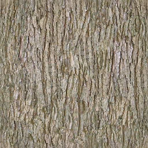 Bark 12