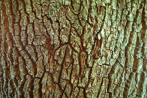Bark 16
