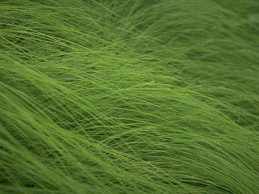 Herb 02