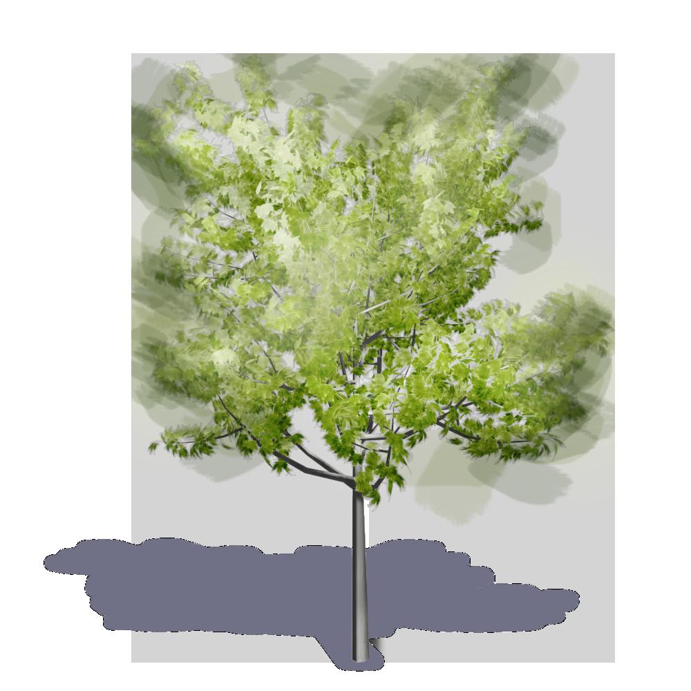 Revit Trees Free