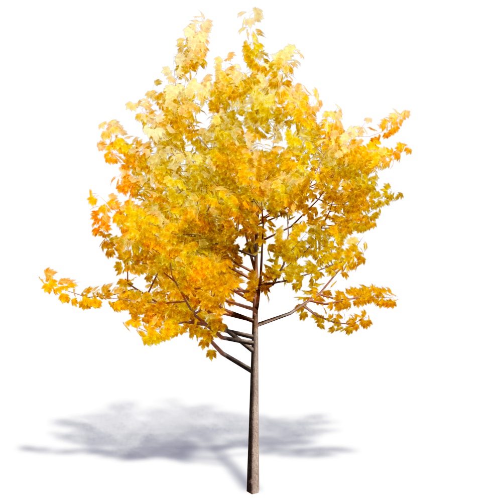 Generic Autumn Tree 01  3D View