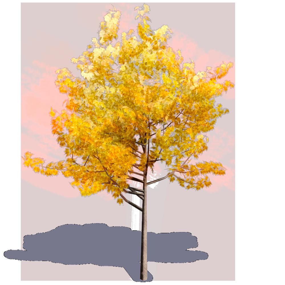 Generic Autumn Tree 1  3D View