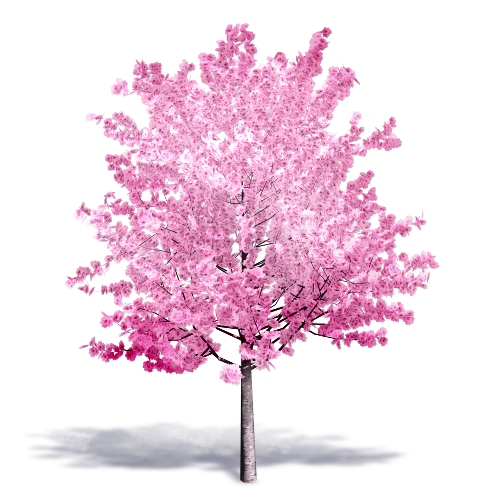 Cherry Tree in Bloom  3D View