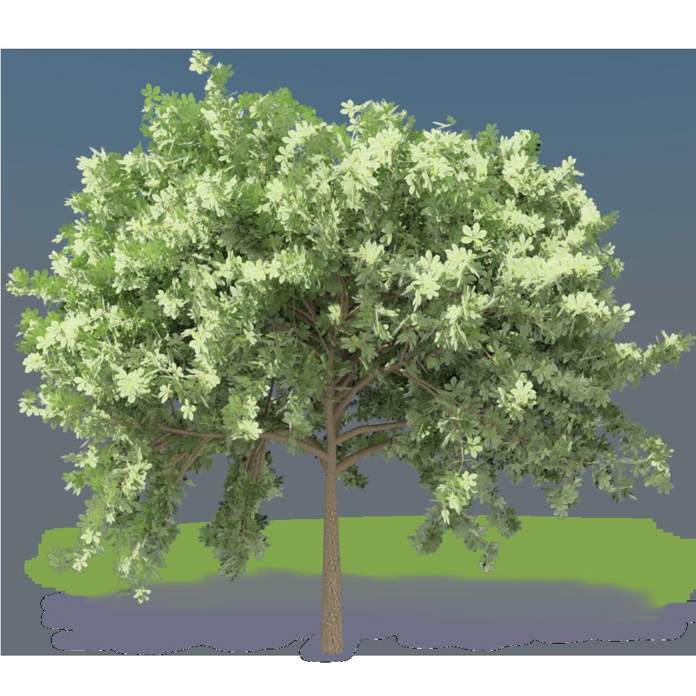 olivier-audibert-troin fr
