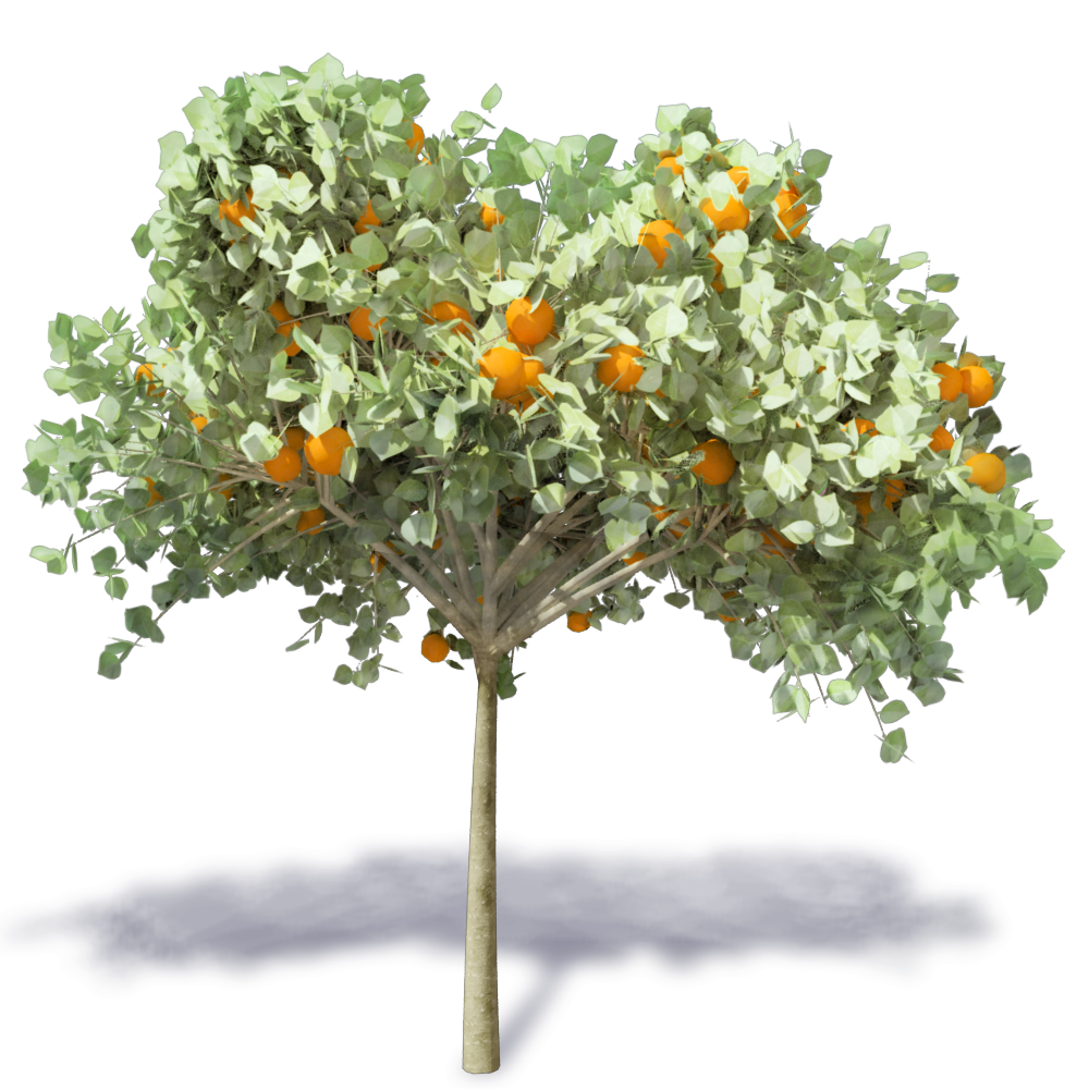 CAD and BIM object - Orange Tree 2 - Plants
