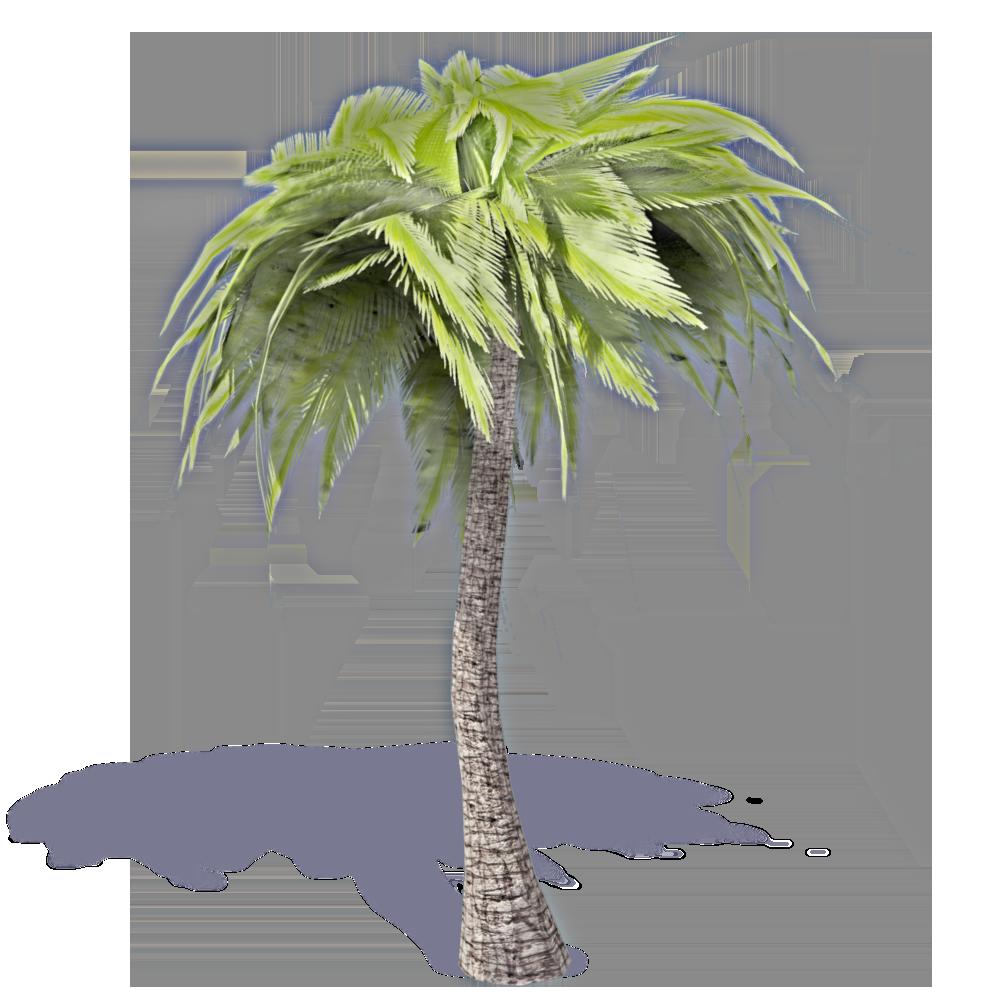 CAD and BIM object - Palm Tree 1 - Plants