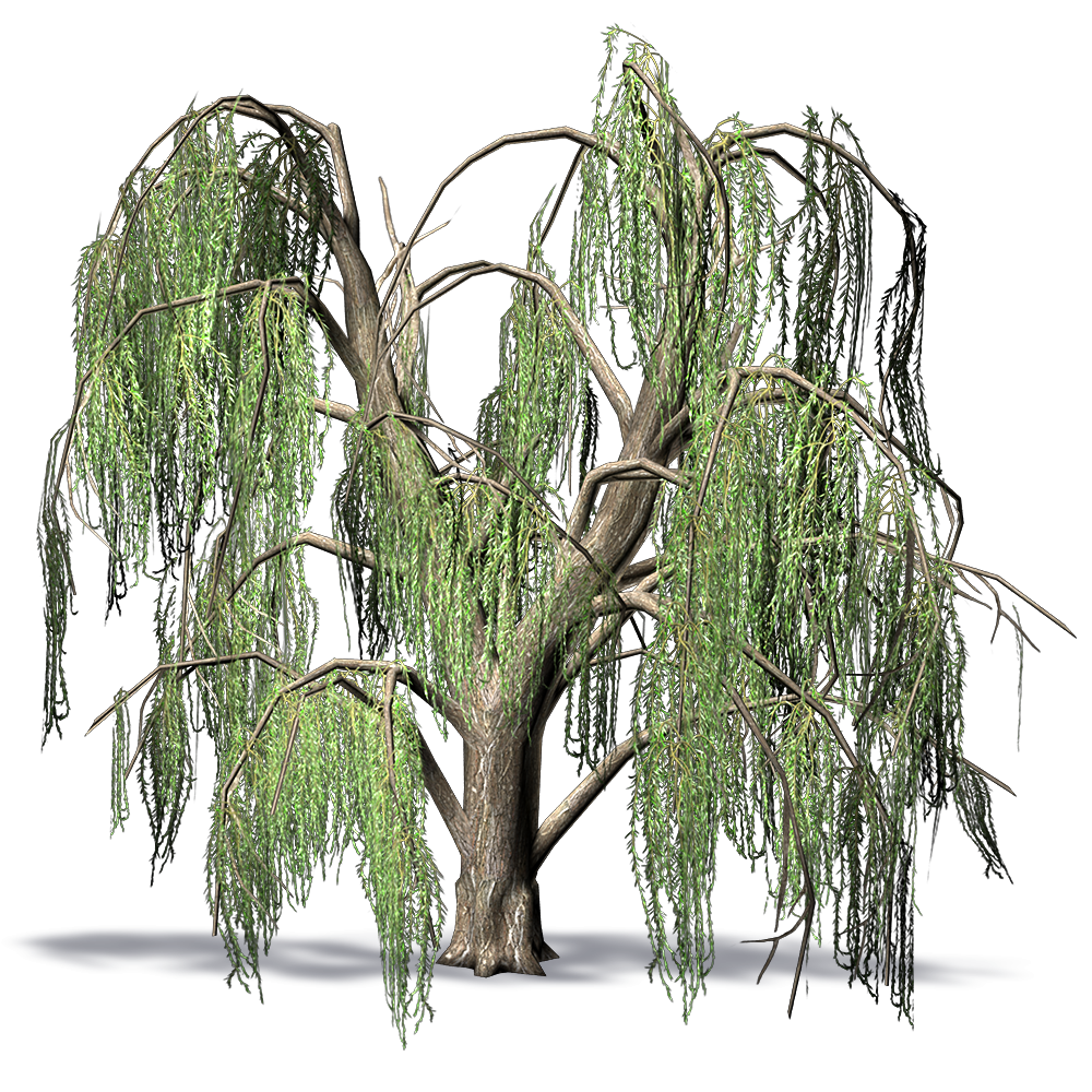 CAD and BIM object - Weeping Willow - Plants