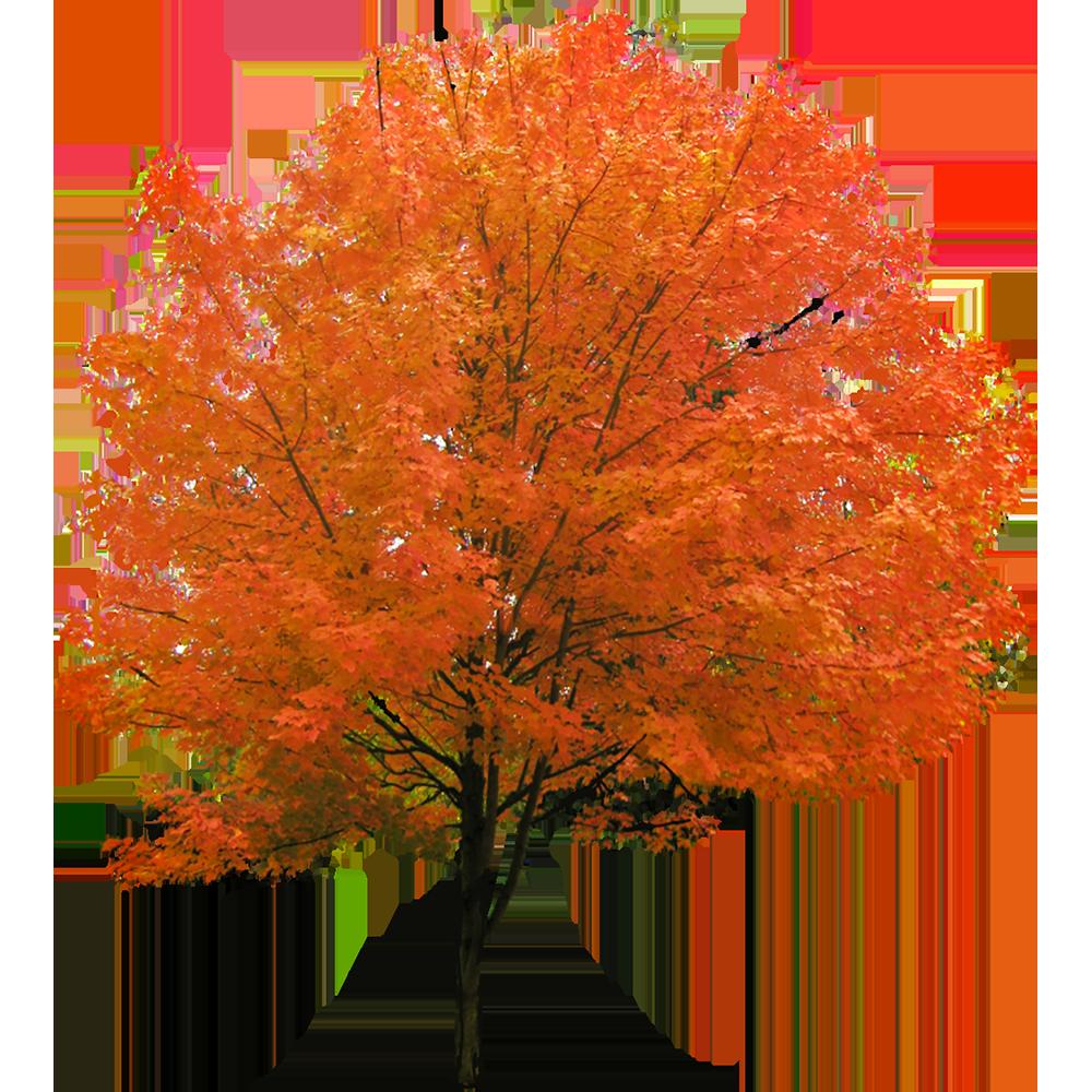 Image - Entourage - Autumn Tree 4