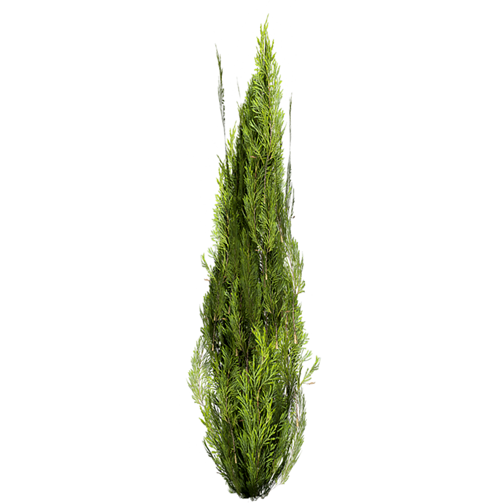 Image - Entourage - Cypress 1
