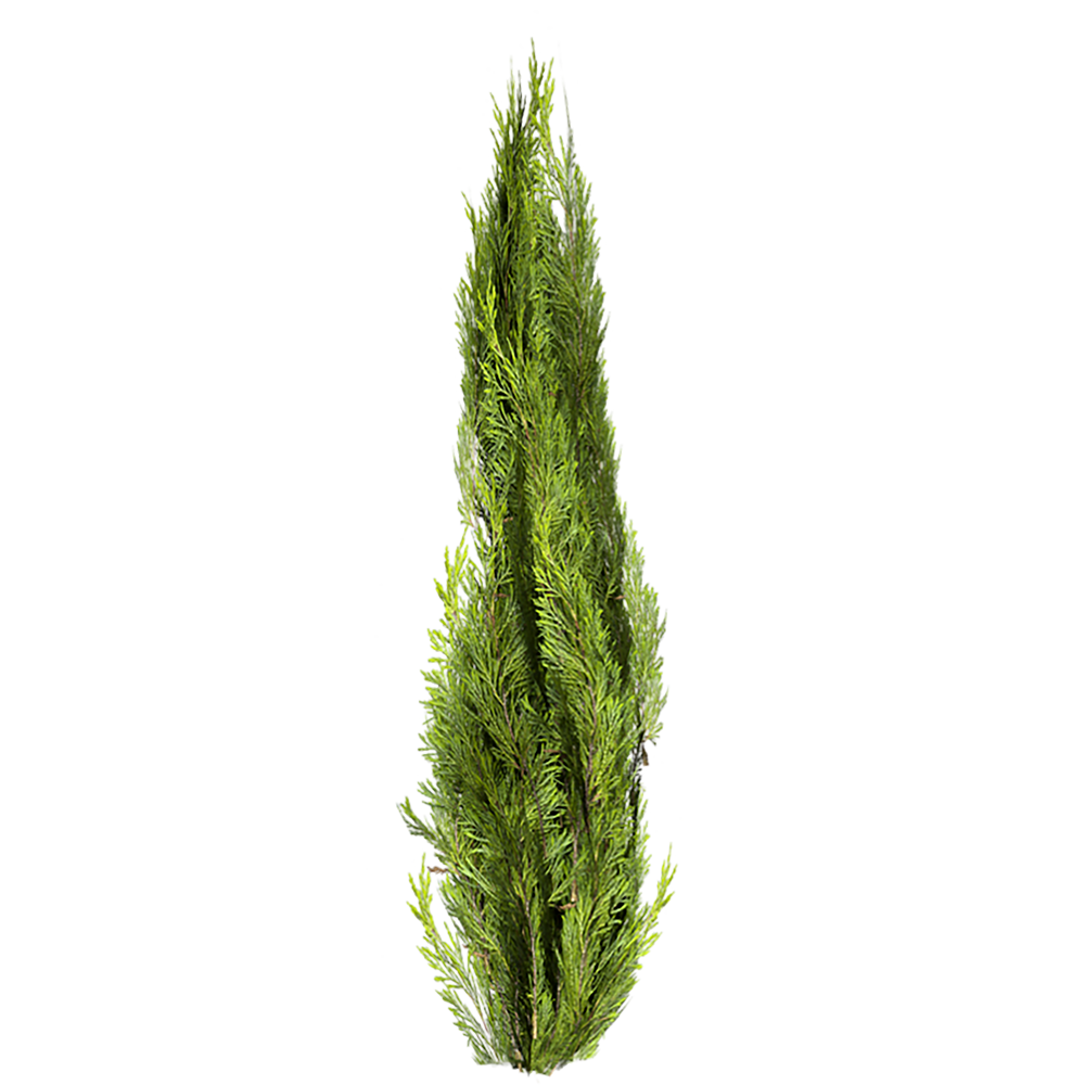 Image - Entourage - Cypress 3