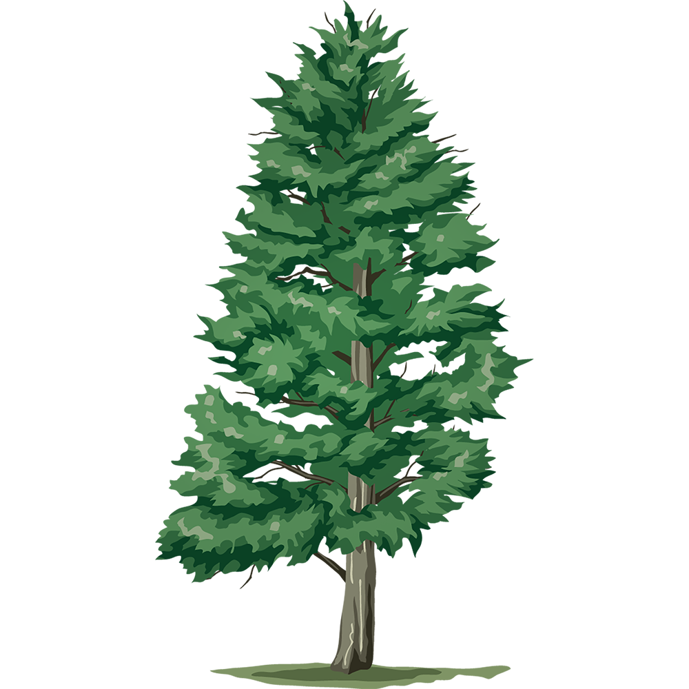 Image - Entourage - Drawing Tree 2