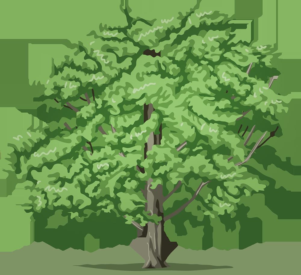 Image - Entourage - Drawing Tree 4