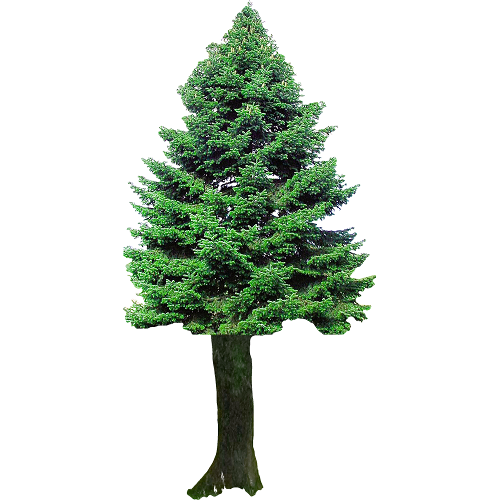 Image - Entourage - Fir Tree 4
