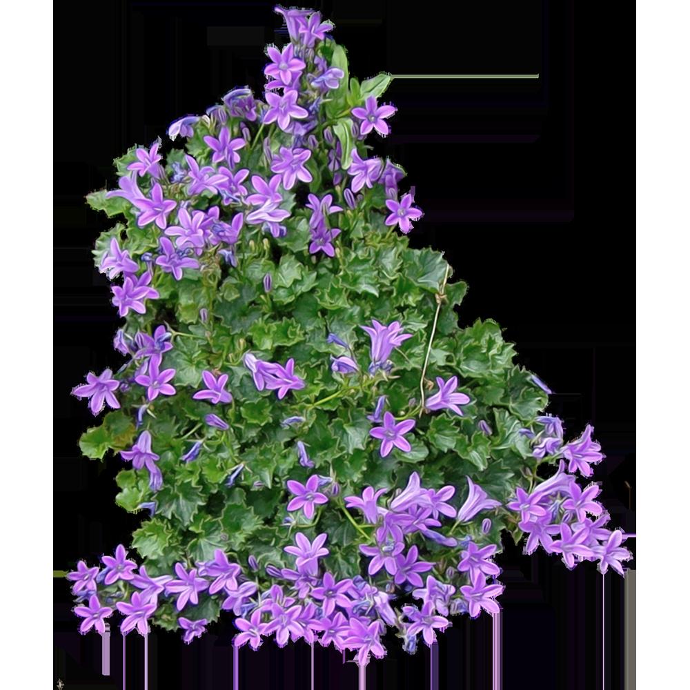 Image - Entourage - Flower 6