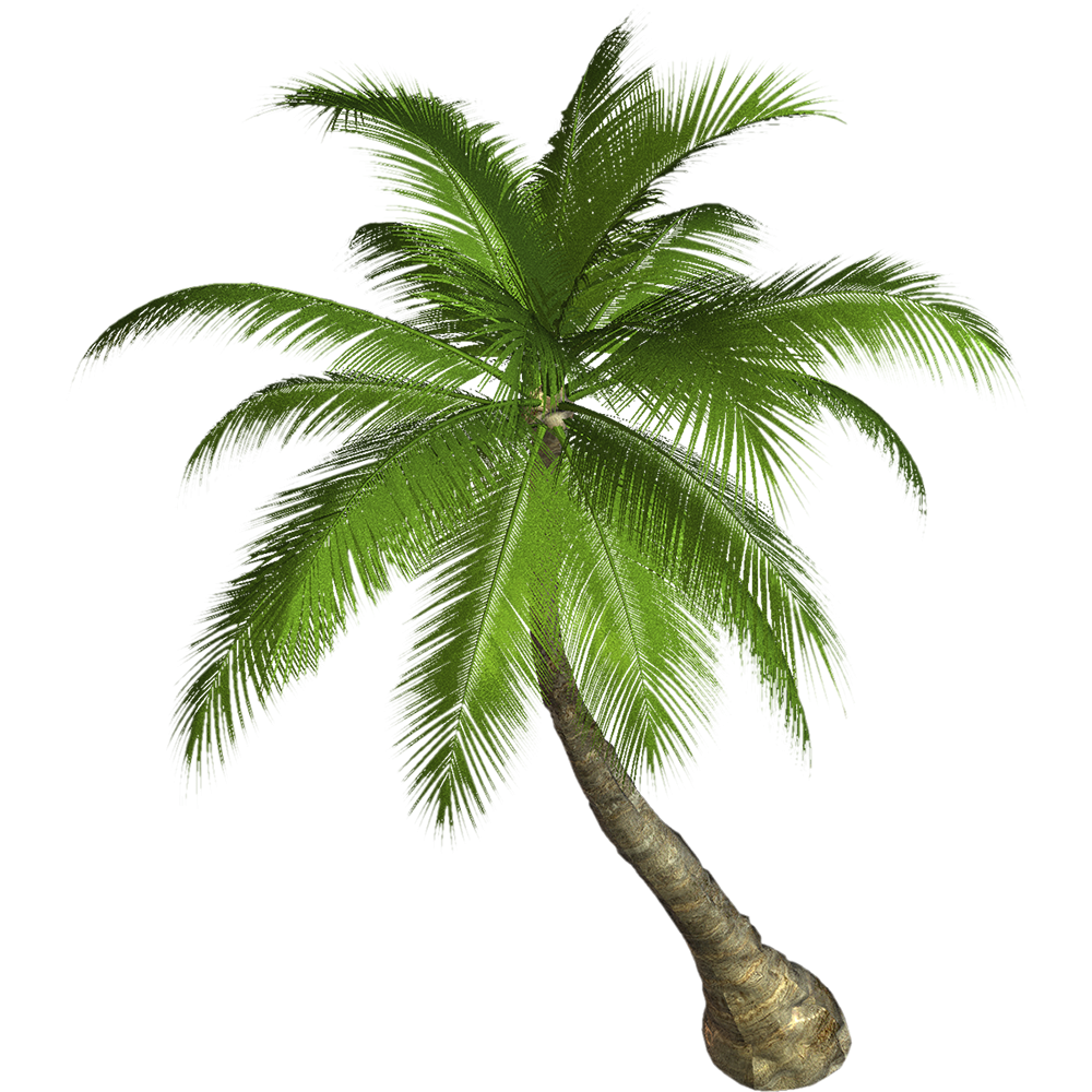 Image - Entourage - Palm Tree 10