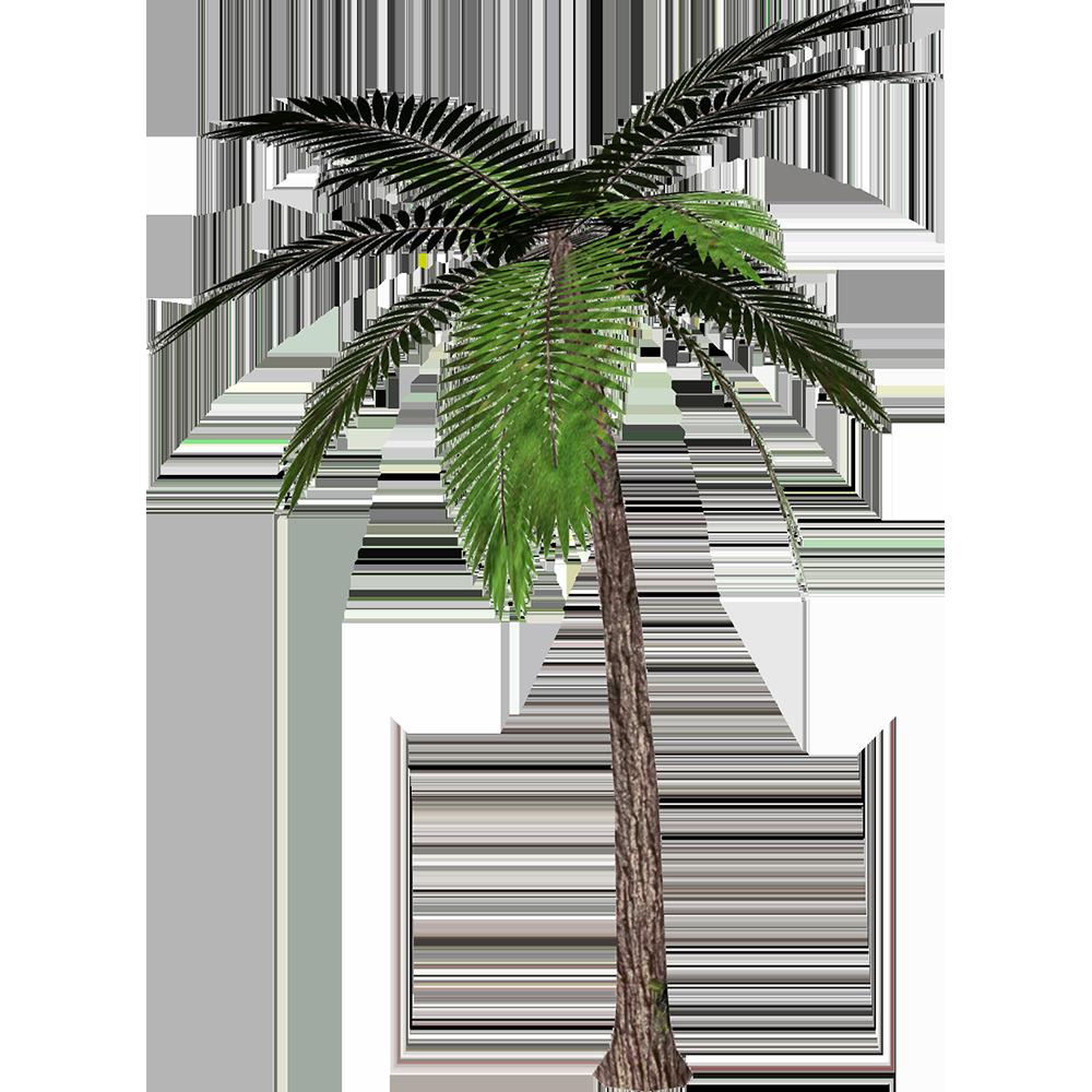Image - Entourage - Palm Tree 12