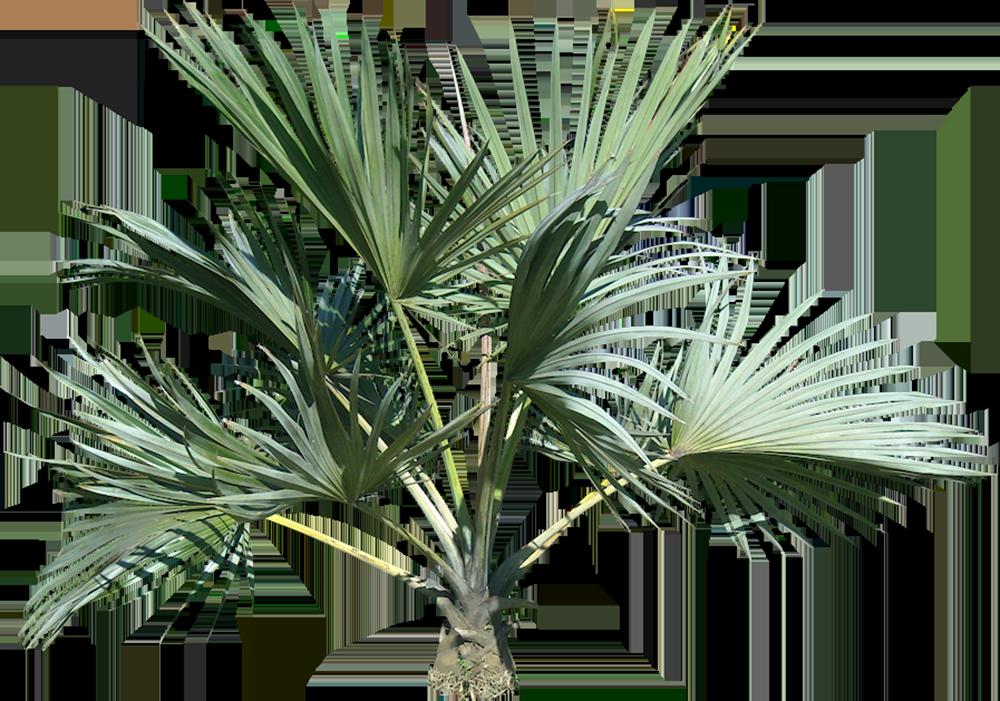 Image - Entourage - Palm Tree 14