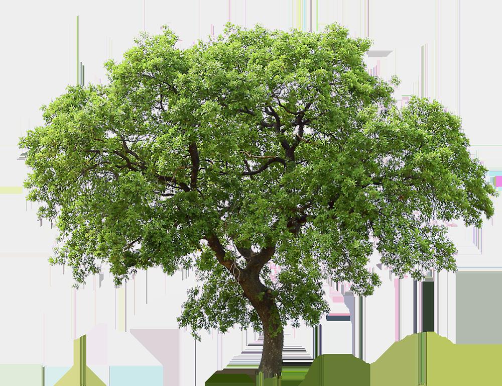 Image - Entourage - Tree 3