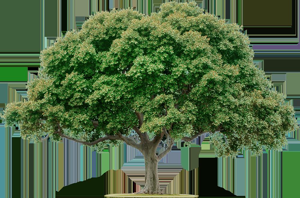 Image - Entourage - Tree 4