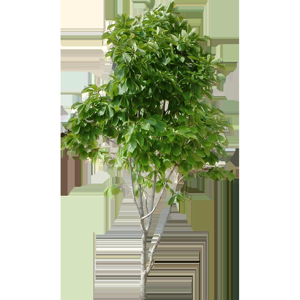 Image - Entourage - Tree 8