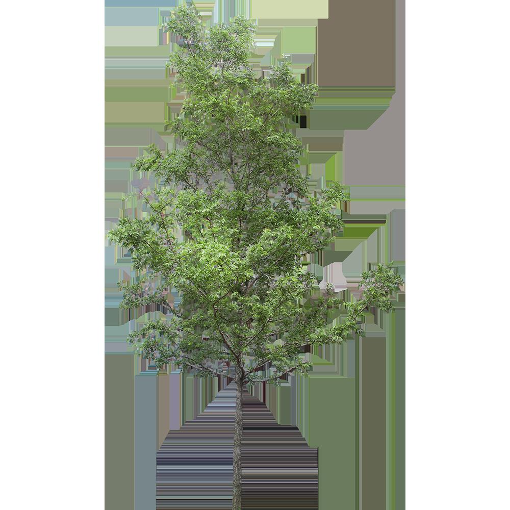 Image - Entourage - Tree 21