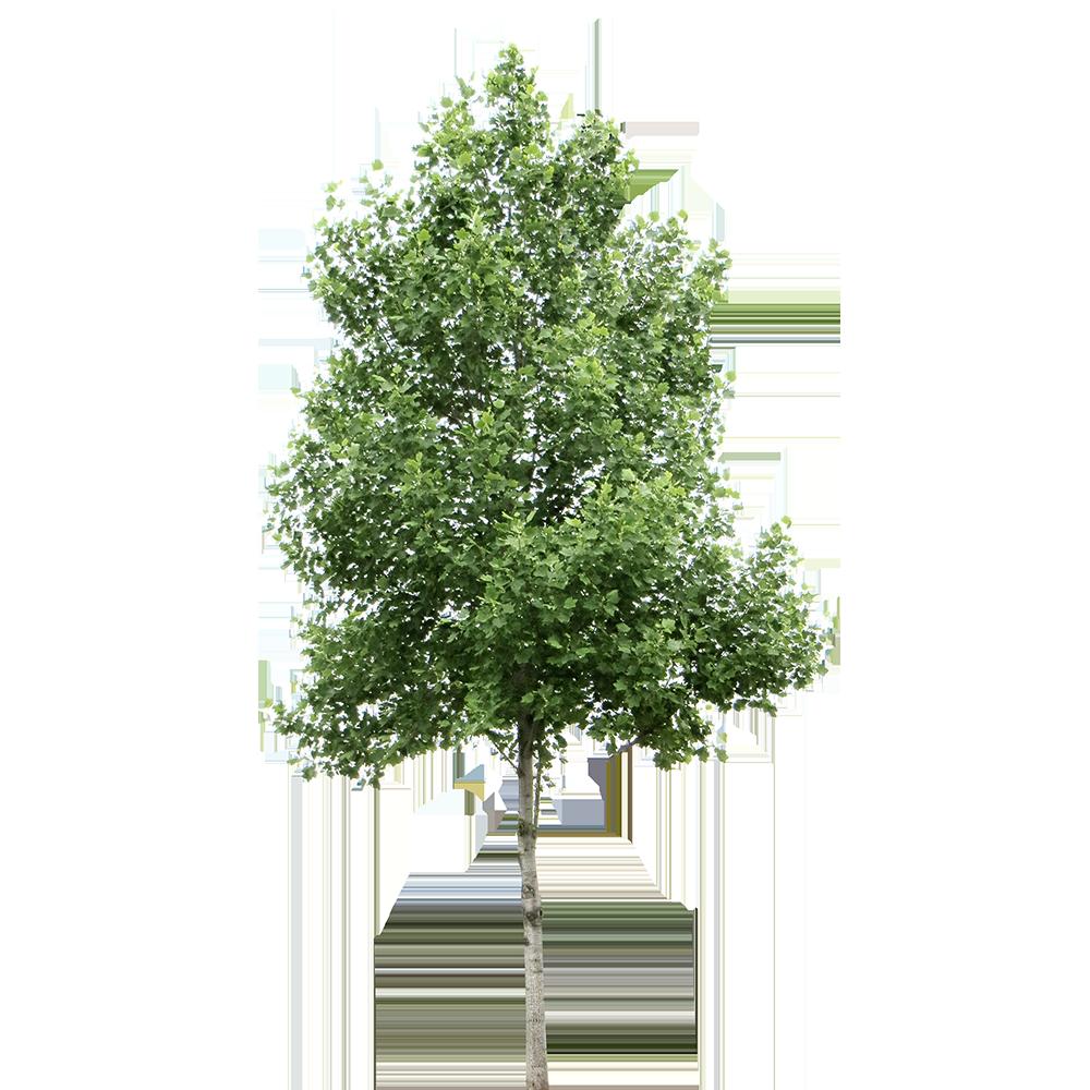 Image - Entourage - Tree 22