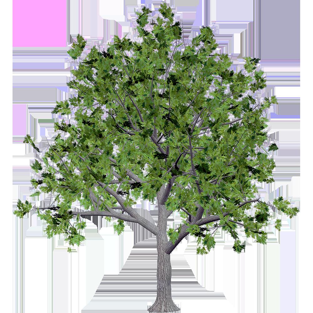 Image - Entourage - Tree 24