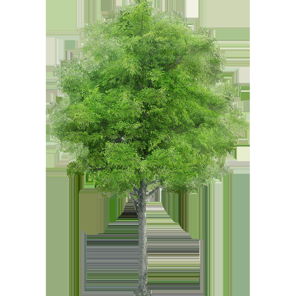 Image - Entourage - Tree 26