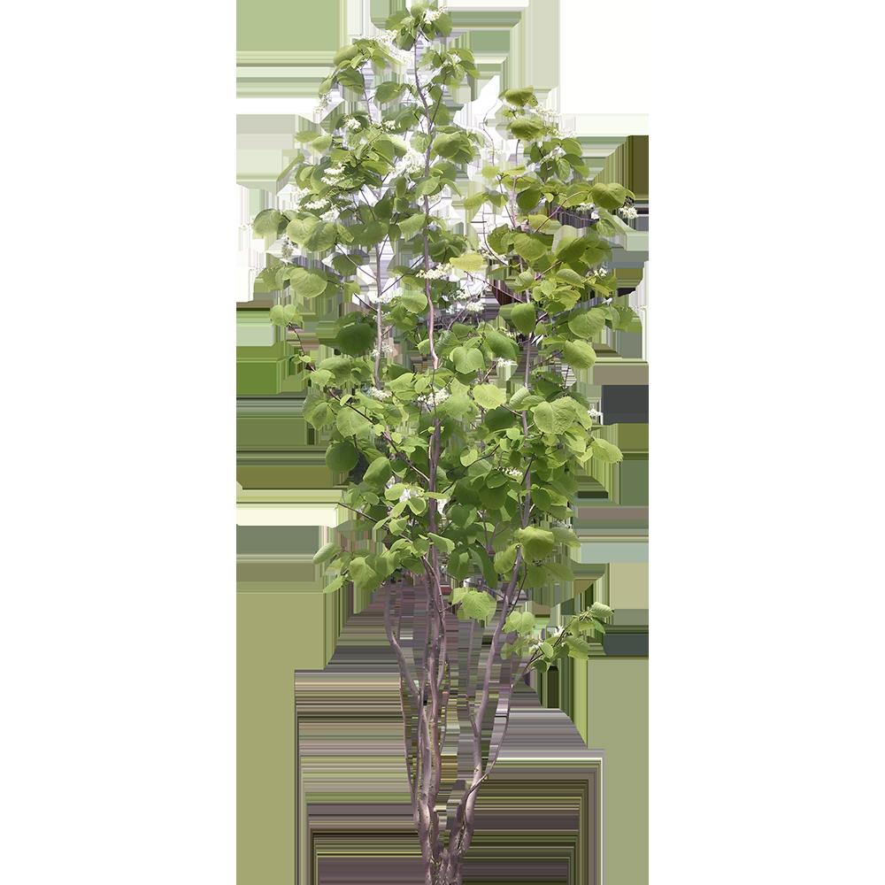 Image - Entourage - Tree 28