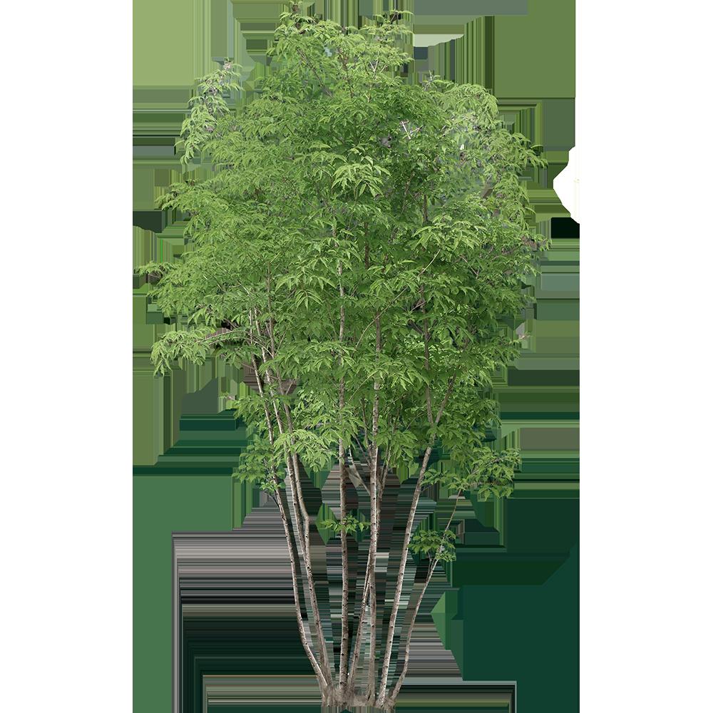 Image - Entourage - Tree 29