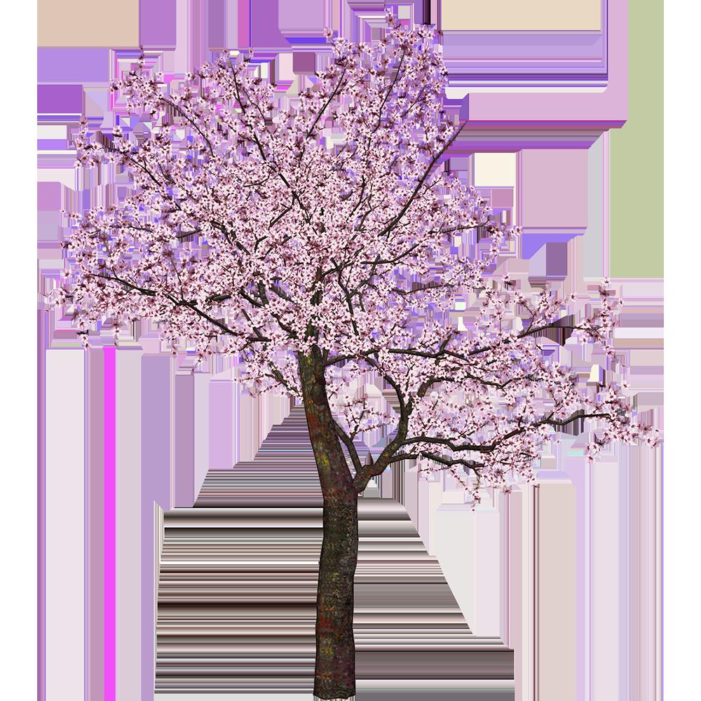 Image - Entourage - Tree 30