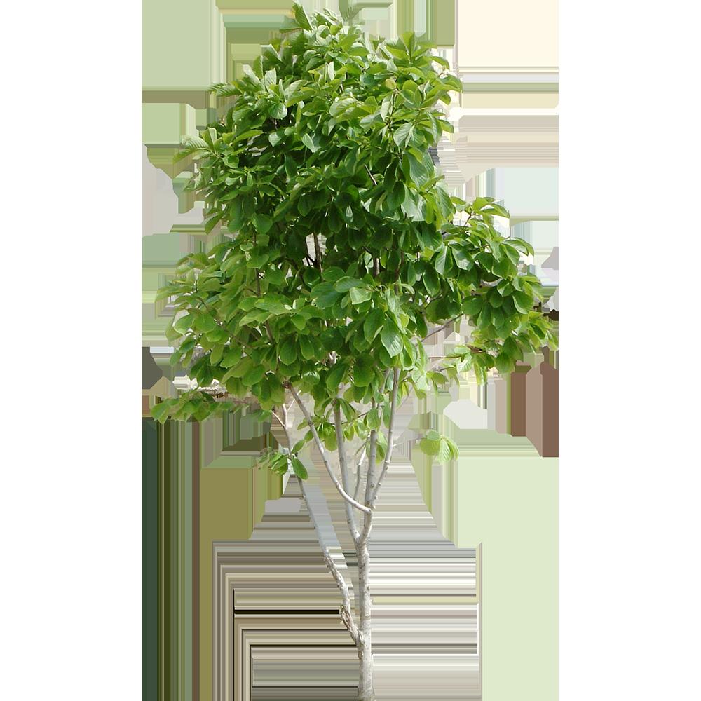 Image - Entourage - Tree 31