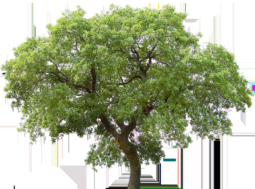 Image - Entourage - Tree 37