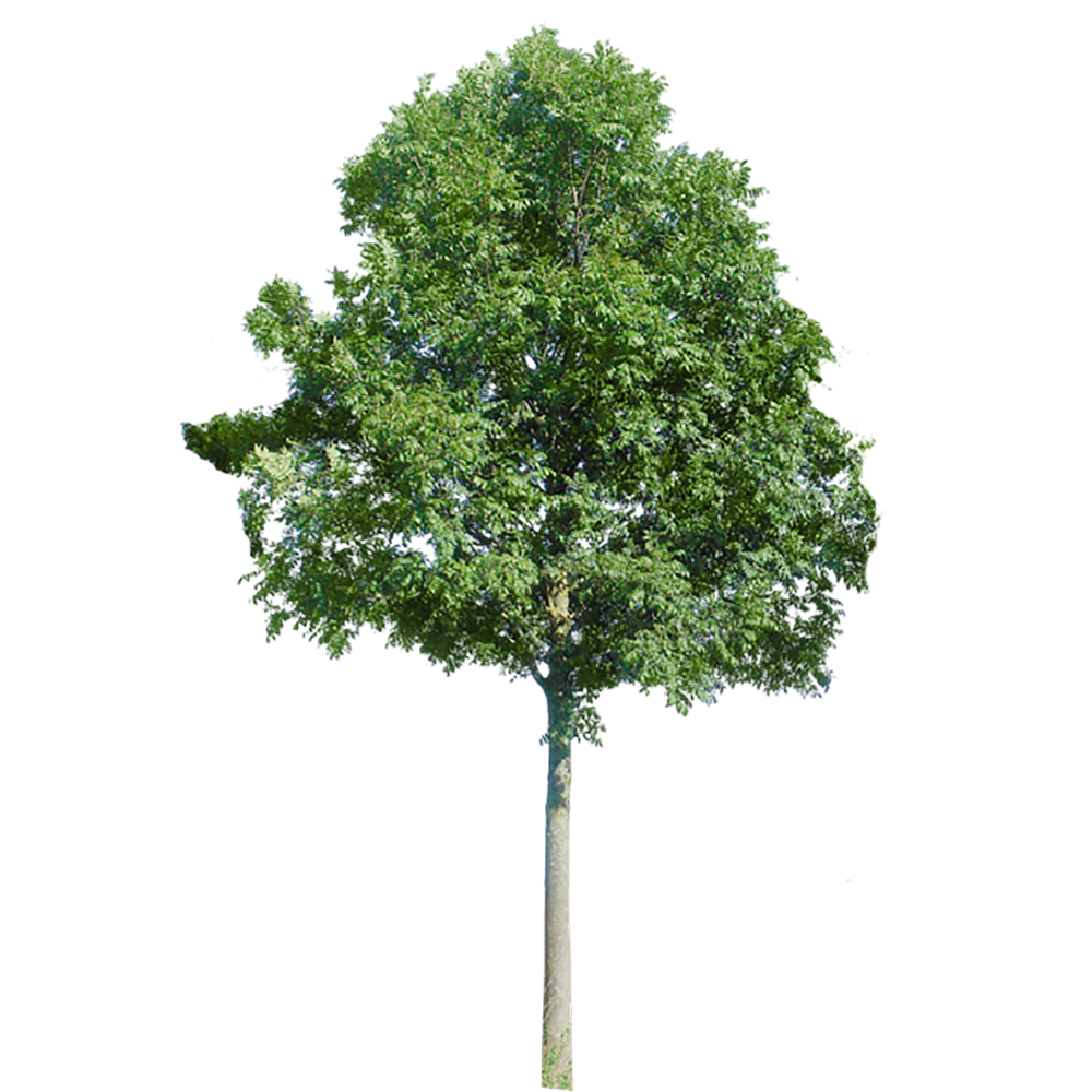 Image - Entourage - Tree 42