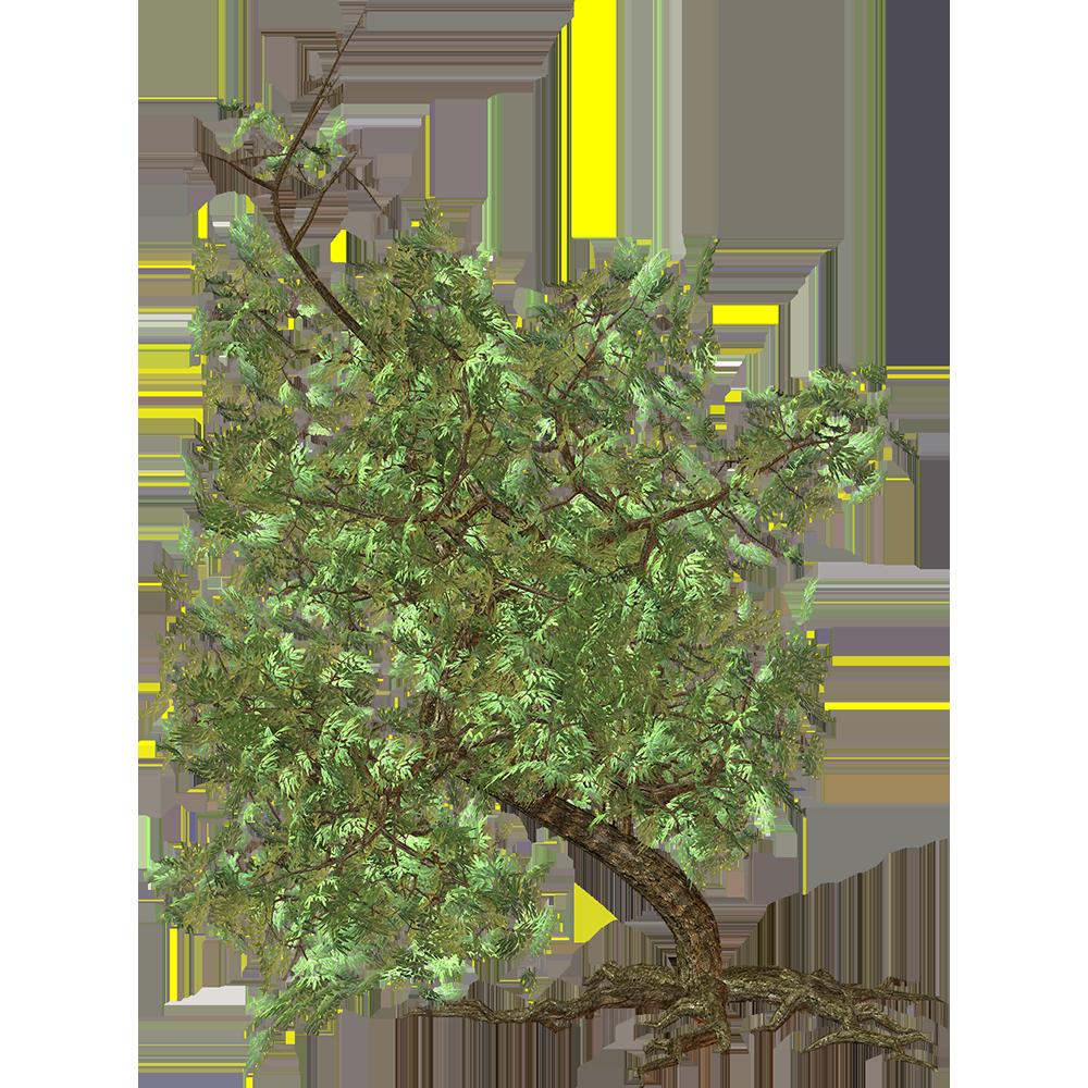 Image - Entourage - Tree 46