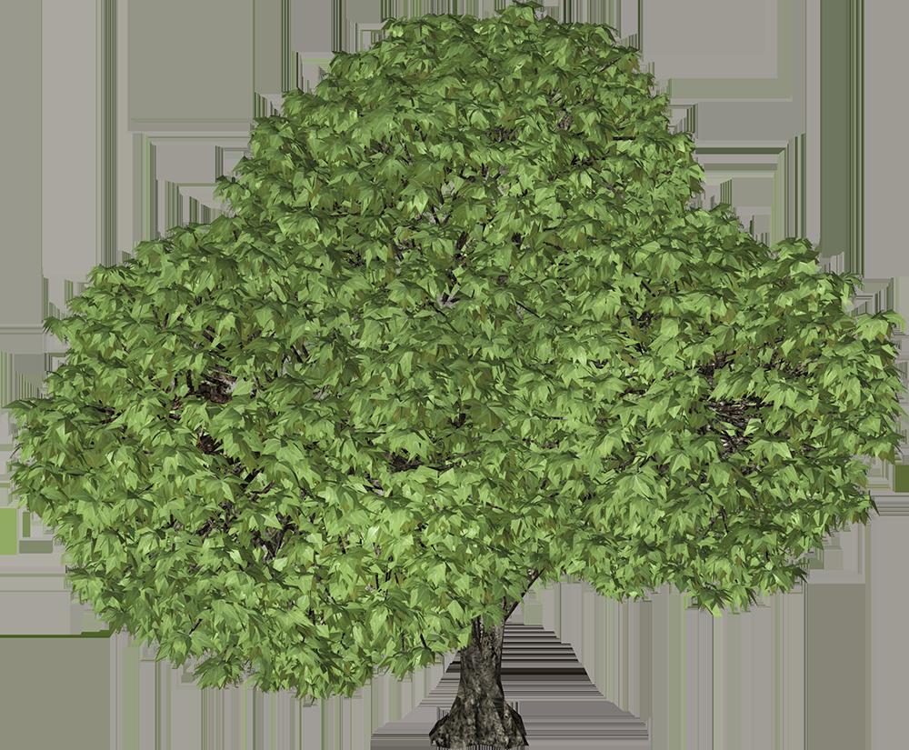 Image - Entourage - Tree 47