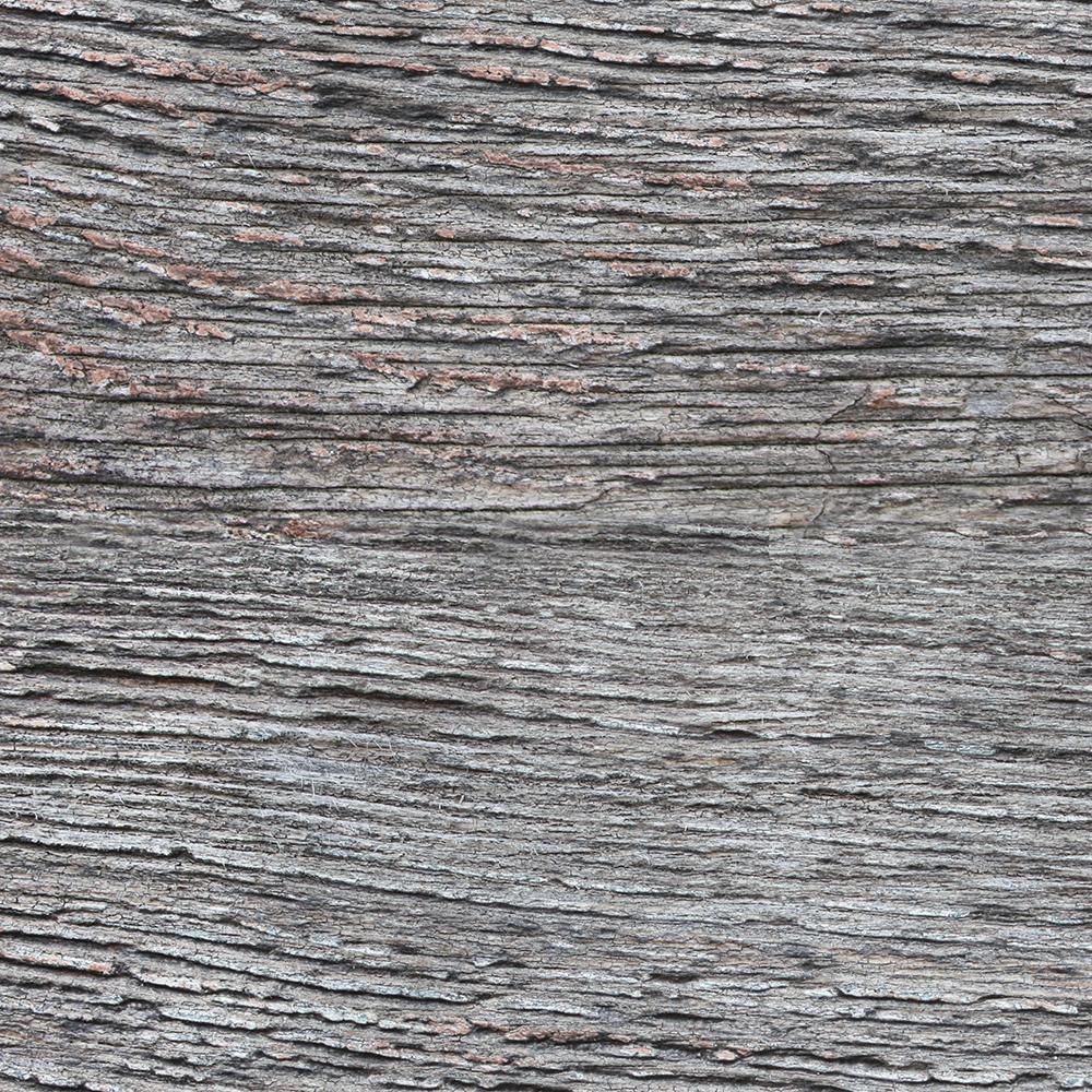 Tree Trunk Texture Grey01