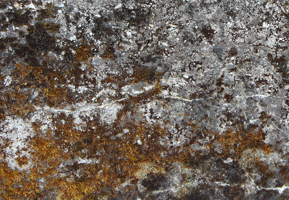 Concrete Mossy 1