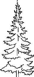 tree 10c