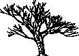 tree 19c