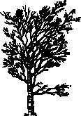 tree 18c