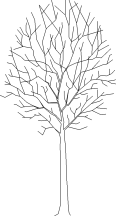 Tree 49