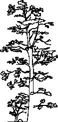 Tree 57