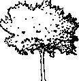 tree 64