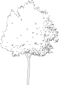 tree 67