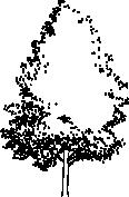 tree 68