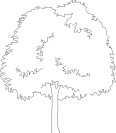 Tree 75