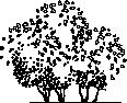 Tree 76