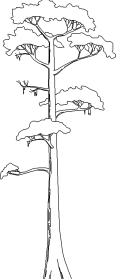 Tree 82