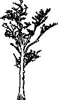 Tree 83